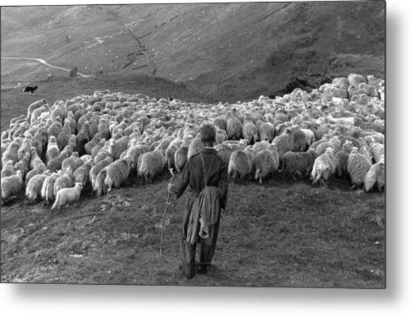 Snowdonia Sheep Metal Print by Grace Robertson