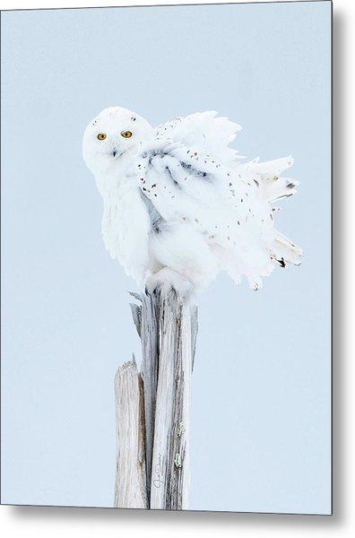 Snowy Owl Feather Shake Metal Print