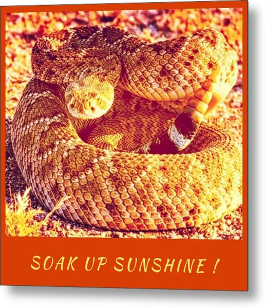 Soak Up Sunshine Metal Print