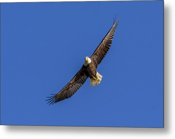 Metal Print featuring the photograph Soaring Eagle by Lori Coleman