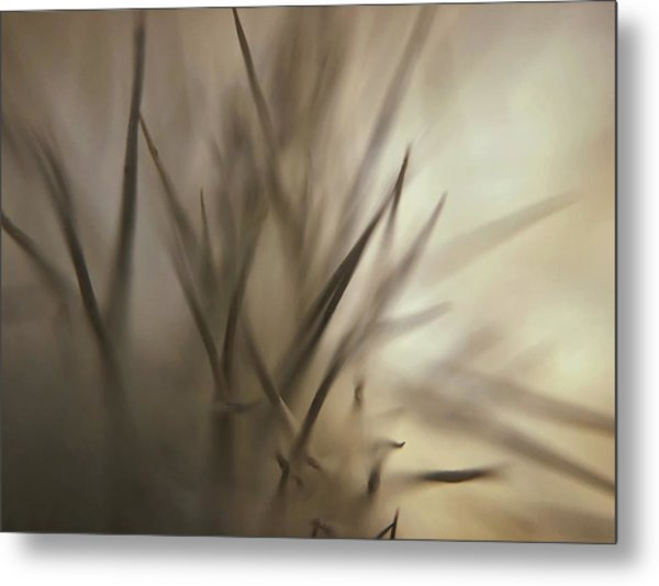 Soft And Spiky Metal Print