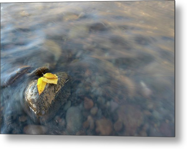 Metal Print featuring the photograph Softly Now by Angela Moyer