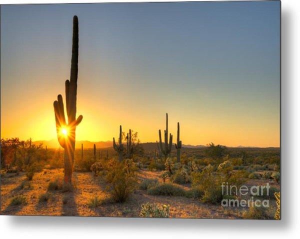 Sonoran Desert Catching Days Last Rays Metal Print