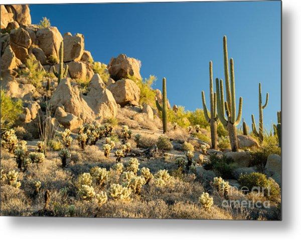 Sonoran Desert Landscape Metal Print