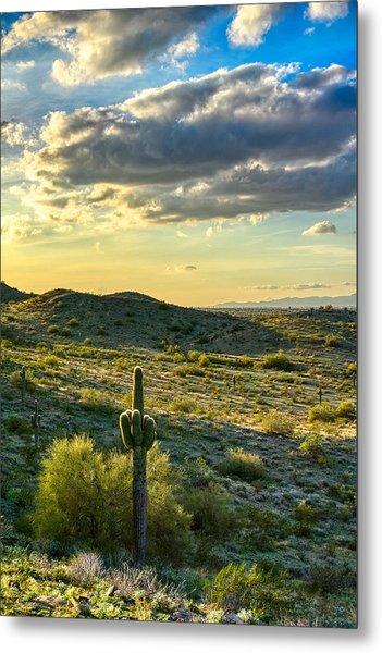 Sonoran Desert Portrait Metal Print