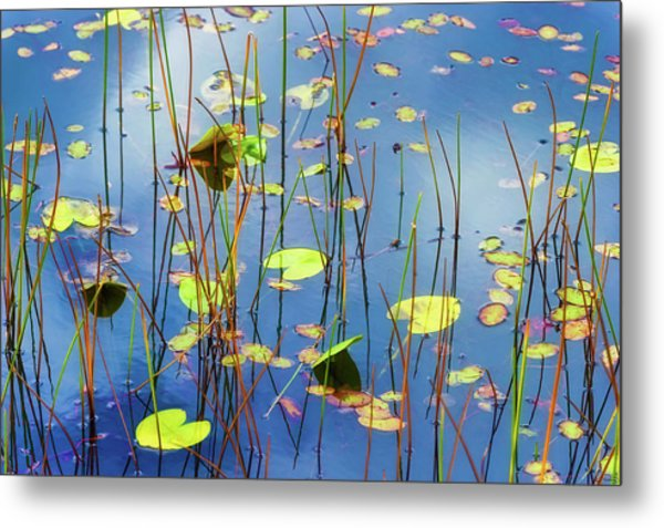 Metal Print featuring the photograph Soothing Reflections by Dee Browning