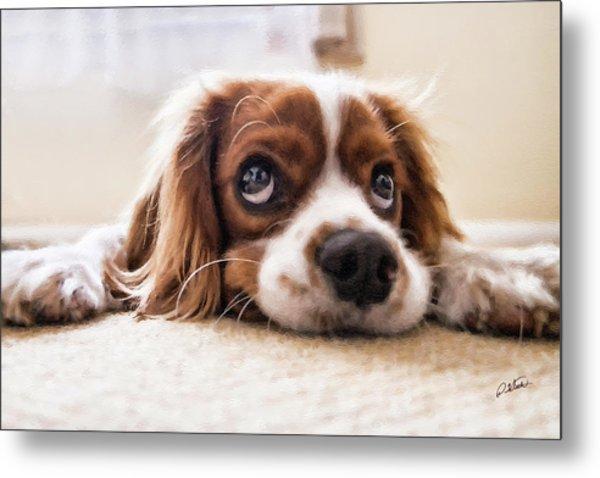 Spaniel Puppy Dwp2785074 Metal Print