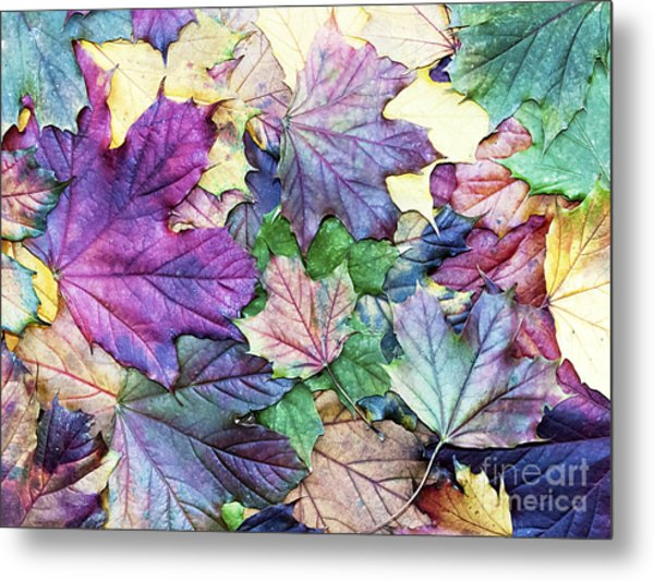 Special Colored Autumn Leaves Metal Print