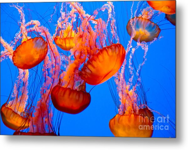 Spectacular Jellyfish Metal Print