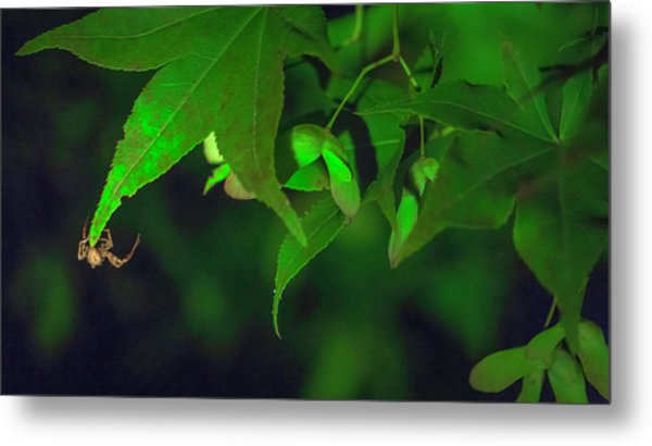 Spider At Night On A Leaf Metal Print