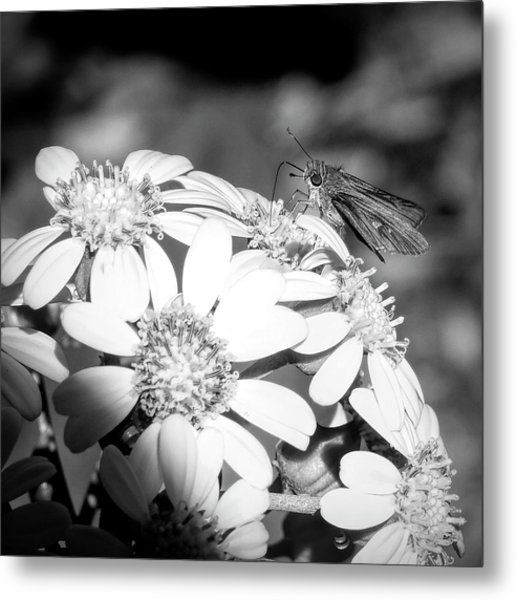 Spotlight To Pollinate Metal Print