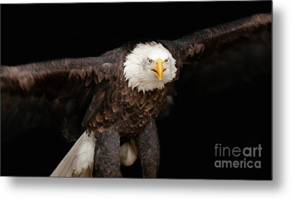Spread Your Wings And Fly Metal Print