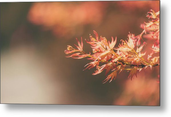 Spring Or Fall Metal Print