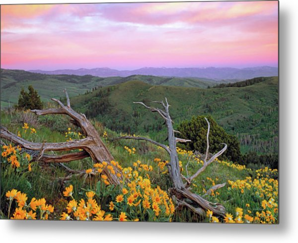 Spring Sunset Metal Print by Leland D Howard