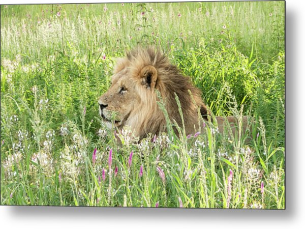 Springtime In The Kgalagadi Metal Print
