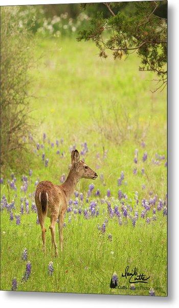 Springtime Whitetail Metal Print