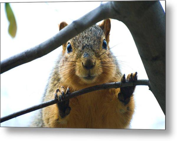 Spying Fox Squirrel Metal Print