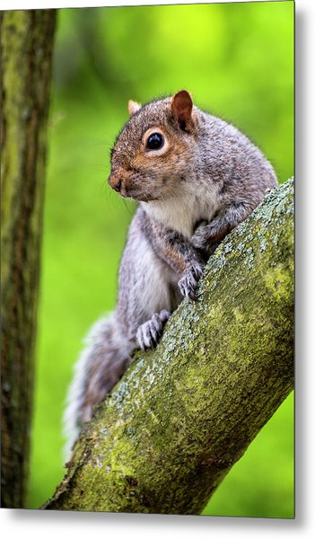 Squirrel At Greenwich Park Metal Print