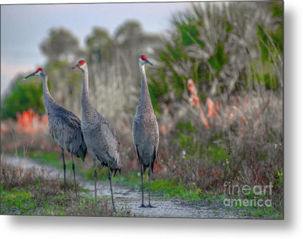 Metal Print featuring the photograph Standing Sandhills by Tom Claud
