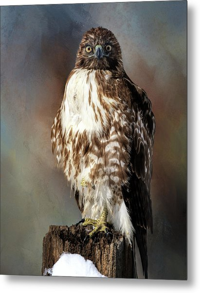Stare Down With A Hawk Metal Print