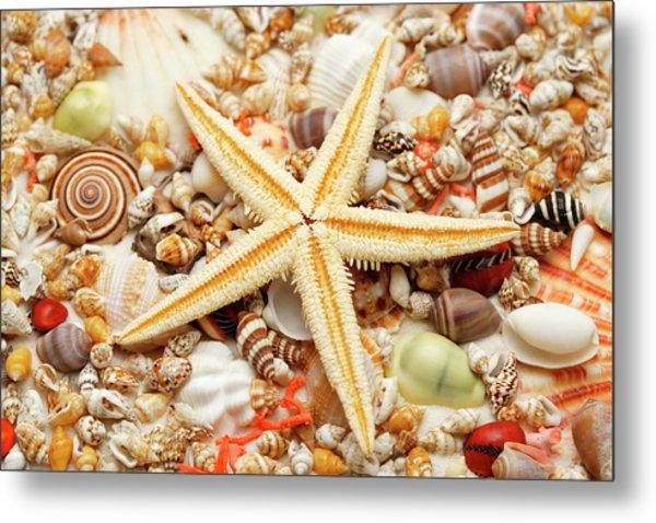Starfish And Assorted Seashells Metal Print by Imagemore Co.,ltd.