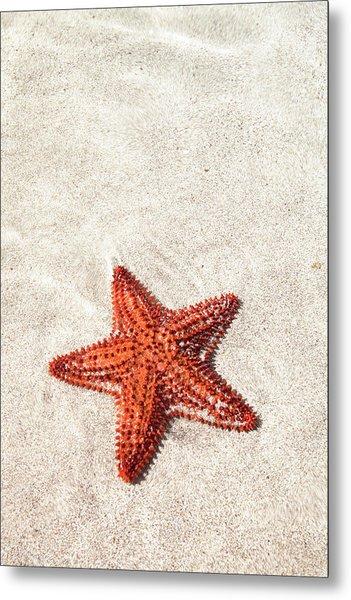 Starfish Under Water Metal Print