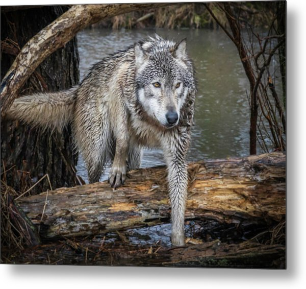 Stepping Over Metal Print