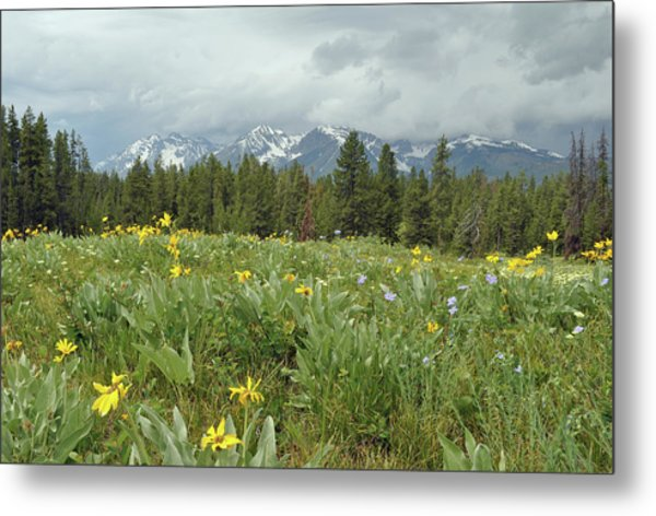 Stormy Tetons And Flowers Metal Print
