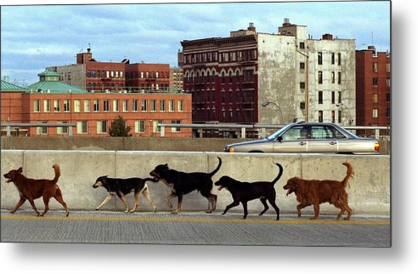 Stray Dogs Stroll Along The Bruckner Metal Print