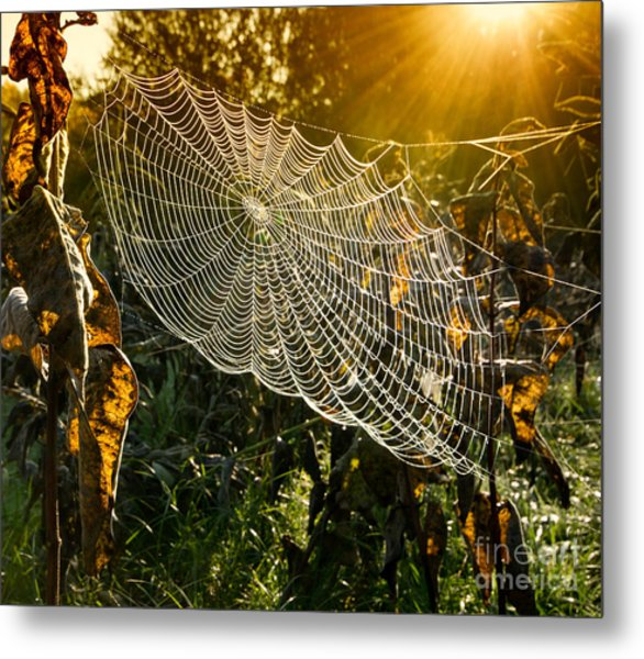 Strings Of A Spiders Web In Back Light Metal Print