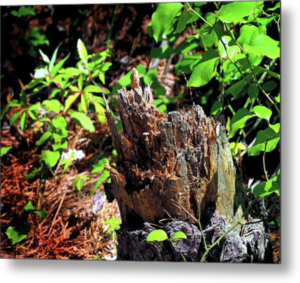 Metal Print featuring the photograph Stumped On Assateague Island by Bill Swartwout Fine Art Photography
