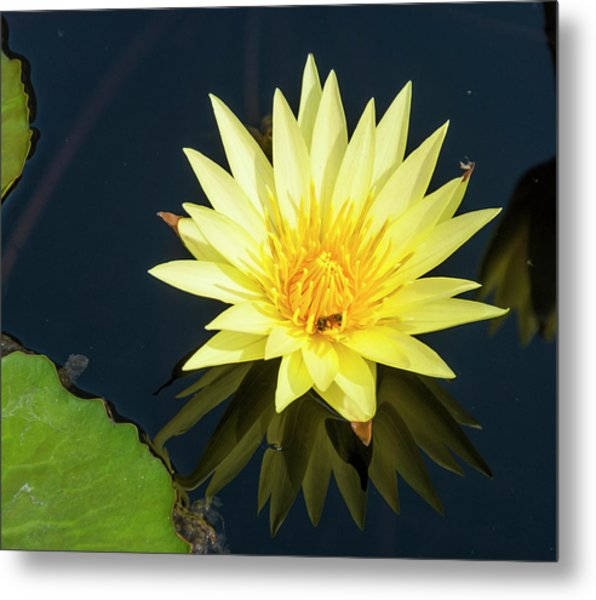 Stunning In Yellow Metal Print