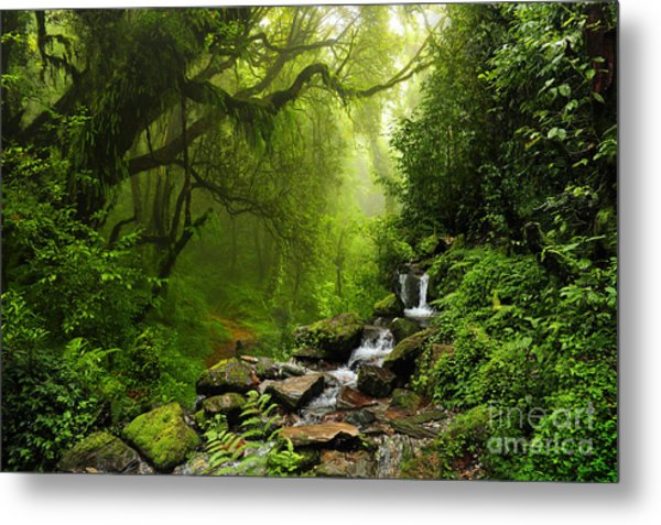 Subtropical Forest In Nepal Metal Print