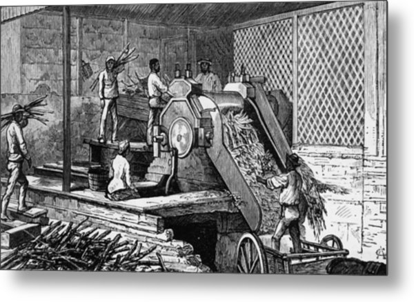 Sugar Cane Crushing Metal Print by Hulton Archive