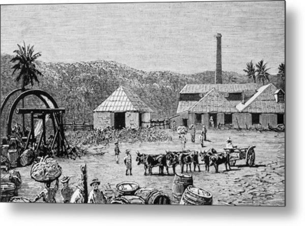 Sugar Mills Metal Print by Hulton Archive