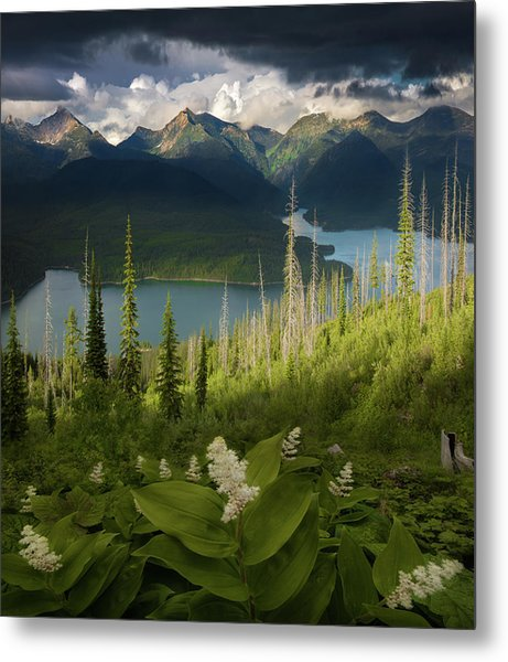 Summer Bloom / Hungry Horse Reservoir, Western Montana  Metal Print
