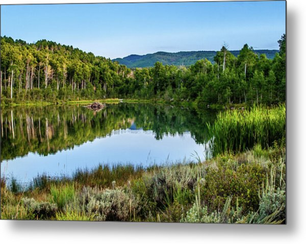 Metal Print featuring the photograph Summer Cove At Ivie Pond by TL Mair