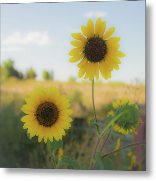 Summer Softness Metal Print