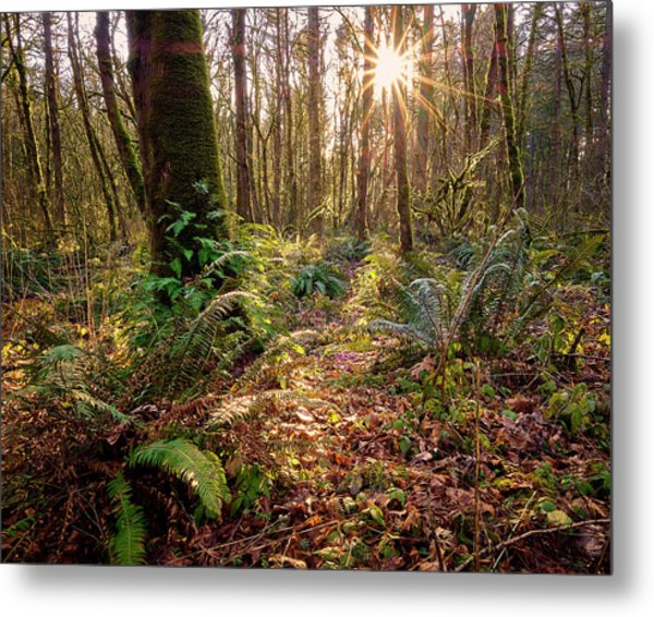 Metal Print featuring the photograph Sun Star In Tryon Creek State Park by Whitney Goodey