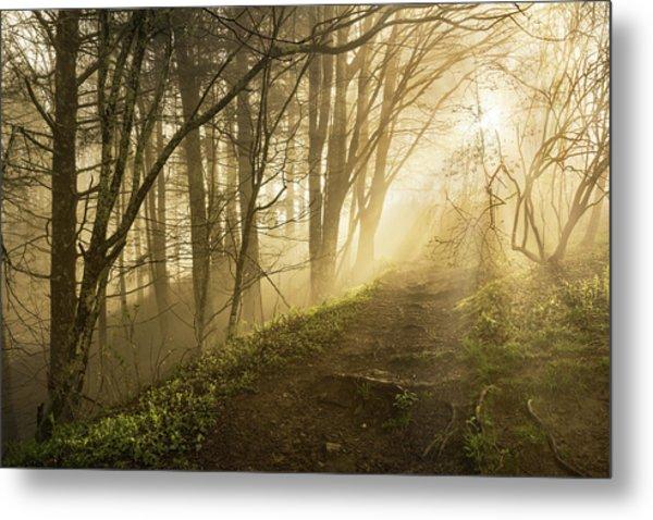 Sunlight Streaming Through Fog Metal Print by Adam Jones