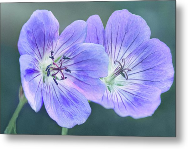 Metal Print featuring the photograph Sunny Blooms by Leda Robertson