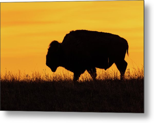 Sunrise Bison Metal Print