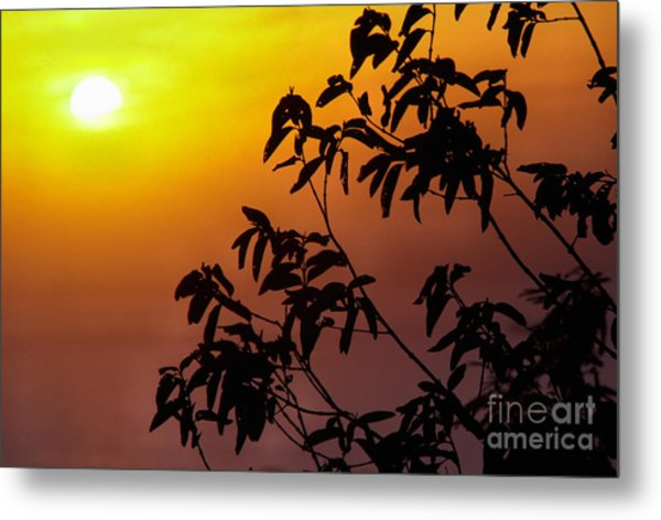 Sunset And Tree Branches Metal Print