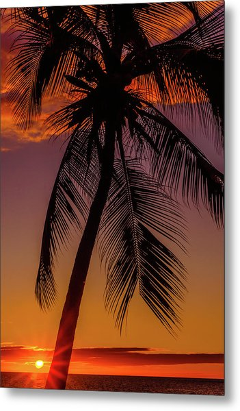 Sunset At The Palm Metal Print