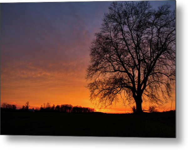 Metal Print featuring the photograph Sunset Silhouette Tree by Mark Dodd