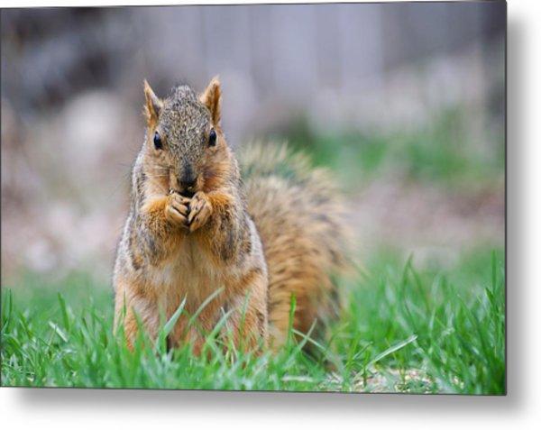 Super Cute Fox Squirrel Metal Print