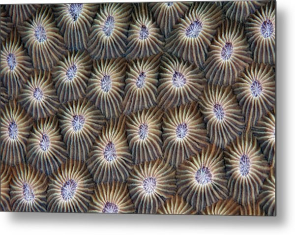 Surface Of Coral Metal Print by Nature, Underwater And Art Photos. Www.narchuk.com