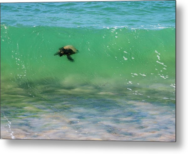 Surfing Turtle Metal Print
