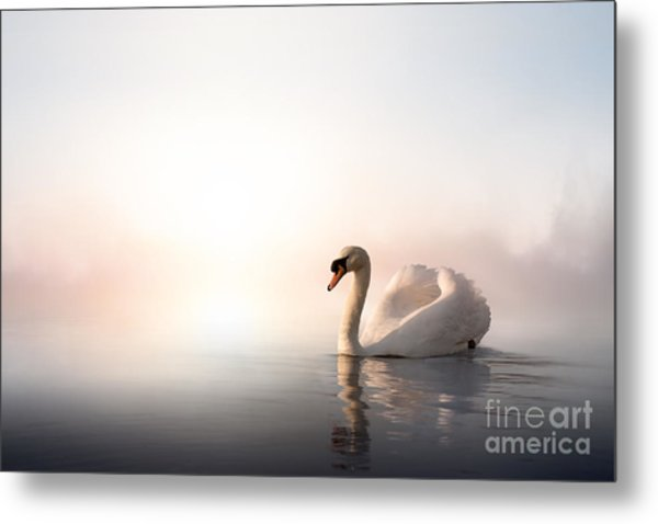 Swan Floating On The Water At Sunrise Metal Print