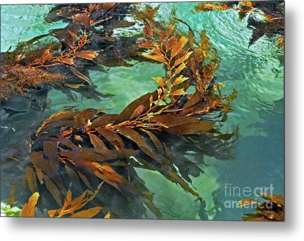 Swaying Seaweed Metal Print